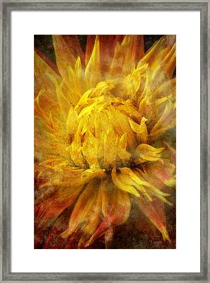 Dahlia Abstract Framed Print by Garry Gay