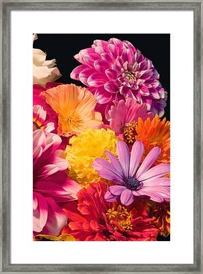 Dahlia African Daisy Zinnia Flowers Framed Print