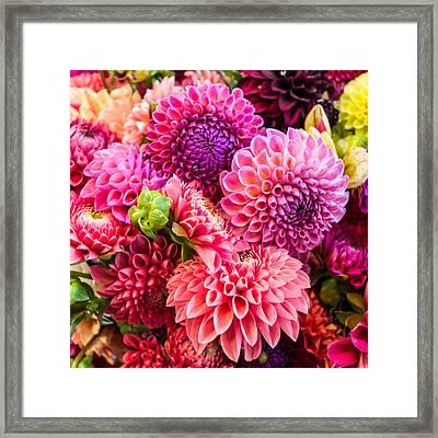 Dahlia Bouquet Number 2 Framed Print