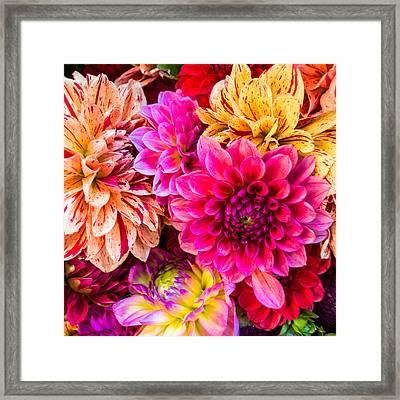 Dahlia Bouquet Number 3 Framed Print