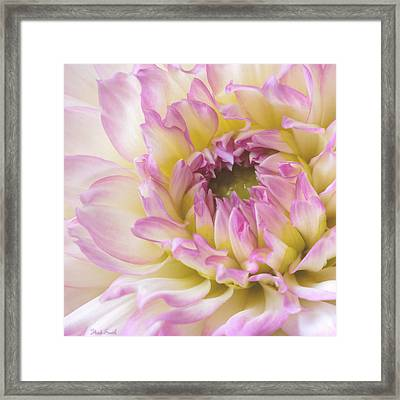 Dahlia Delight Square  Framed Print