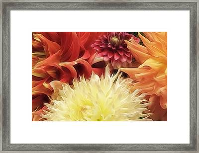Dahlia Delight Framed Print by Wes and Dotty Weber