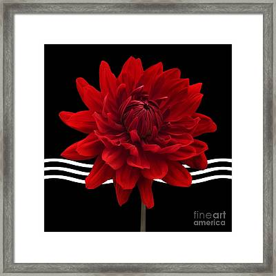 Dahlia Flower And Wavy Lines Triptych Canvas 2 - Red Framed Print by Natalie Kinnear