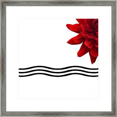 Dahlia Flower And Wavy Lines Triptych Canvas 3 - Red Framed Print by Natalie Kinnear