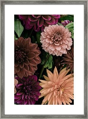 Dahlia Heaven Framed Print by Trish Tritz