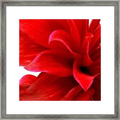 Dahlia II Framed Print