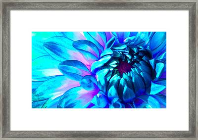 Dahlia In Pastel Framed Print by James Hammen