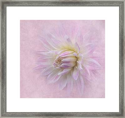 Dahlia In Pink Framed Print
