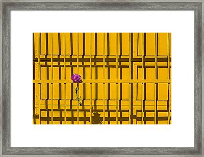 Dahlia In Yellow Gate Framed Print