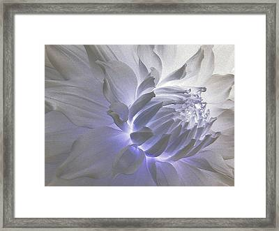 Dahlia Inner Beauty Framed Print