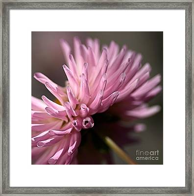 Framed Print featuring the photograph Dahlia by Joy Watson