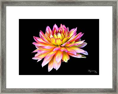 Framed Print featuring the photograph Dahlia by Mariarosa Rockefeller