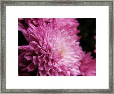 Dahlia Framed Print by McKenna Konze