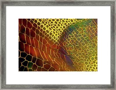 Dahlia Stem Framed Print