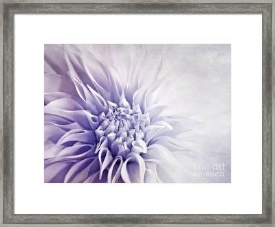 Dahlia Sun Framed Print by Priska Wettstein