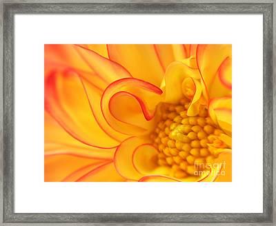 Dahlia Swirls Framed Print