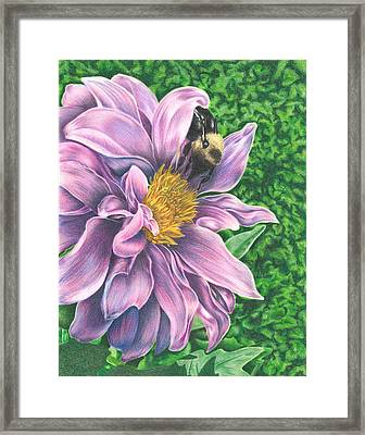 Dahlia Framed Print by Troy Levesque