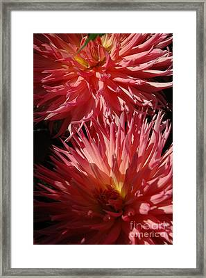 Framed Print featuring the photograph Dahlia Vi by Christiane Hellner-OBrien