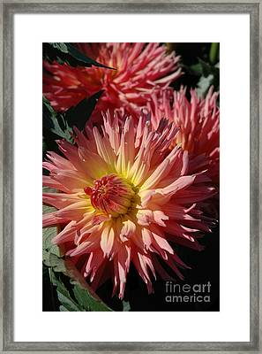 Framed Print featuring the photograph Dahlia Viii by Christiane Hellner-OBrien