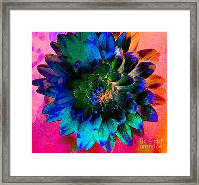 Dahlia With Textures Framed Print by Kathleen Struckle