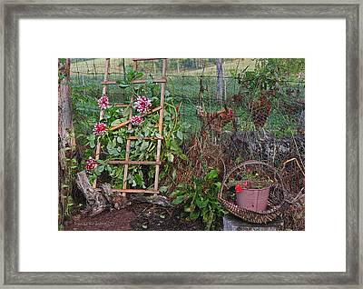 Dahlias And Chickens Framed Print by Denise Romano