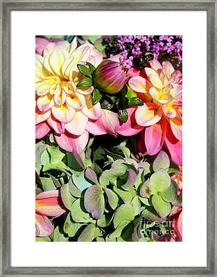 Dahlias And Hydrangeas Bouquet Framed Print by Carol Groenen