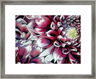 Dahlias In Pastel Framed Print