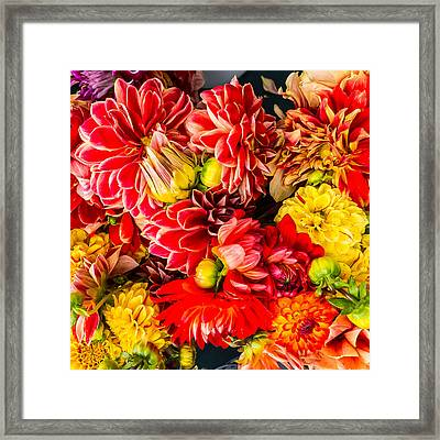 Dahlias Summer Color Framed Print