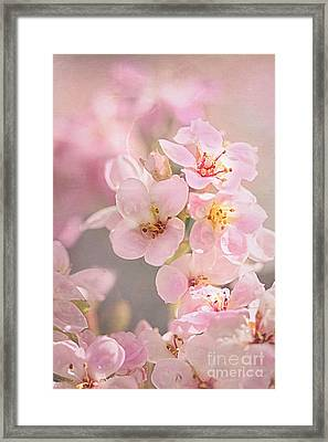 Dainty Blossoms Of Spring Framed Print