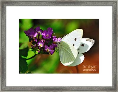 Dainty Butterfly Framed Print by Kaye Menner