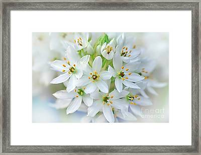 Dainty Spring Blossoms Framed Print