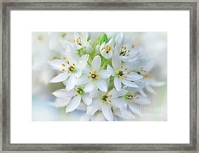 Dainty Spring Blossoms Framed Print by Kaye Menner