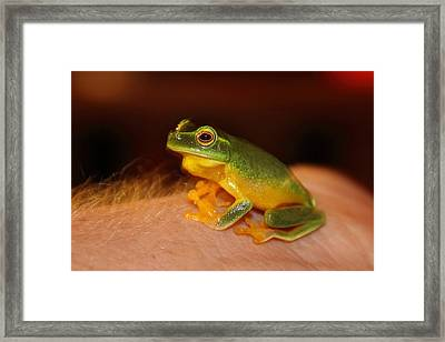 Dainty Tree Frog  Framed Print
