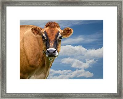 Dairy Cow  Bessy Framed Print by Bob Orsillo