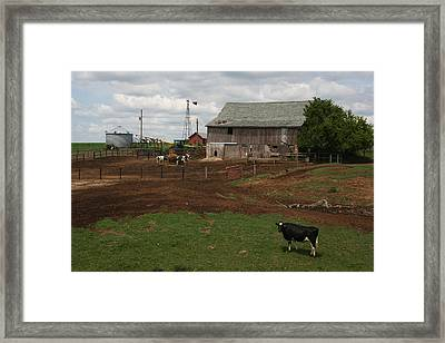 Dairy Cows With Faded Barn Framed Print