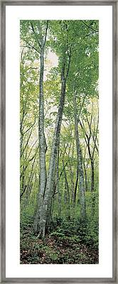 Daisen Tottori Japan Framed Print by Panoramic Images