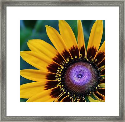 Daisey Of A Different Color Framed Print by Bruce Bley