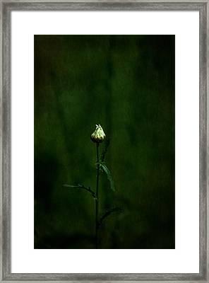 Daisey Framed Print by Simone Ochrym