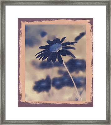 Daisies ... Again - 150ab Framed Print by Variance Collections