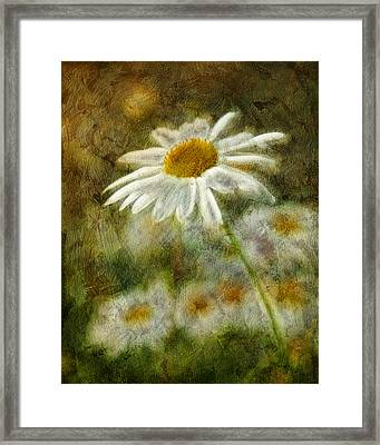Daisies ... Again - P11at01 Framed Print by Variance Collections