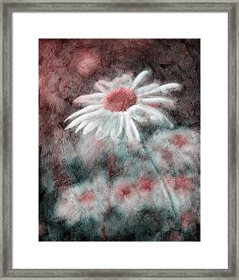 Daisies ... Again - P11ac2t1 Framed Print by Variance Collections