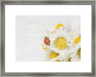 Daisies And Ladybug Framed Print