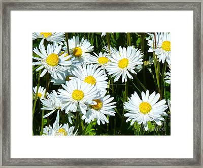 Daisies Artwork Framed Print