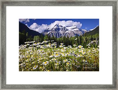 Daisies At Mount Robson Framed Print by Elena Elisseeva