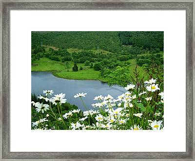White Daisies At Queens View Framed Print