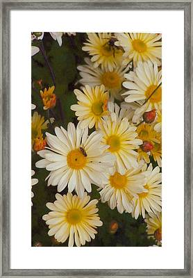Daisies Framed Print by Barb Baker