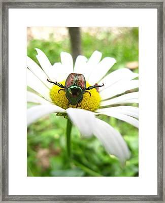 Daisies Bug Framed Print by Jennifer E Doll