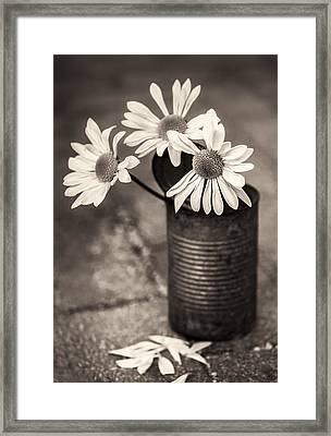 Daisies Can Framed Print
