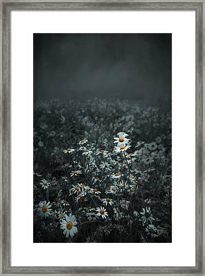 Daisies-daisies Framed Print