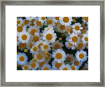 Daisies Framed Print by Diane Miller